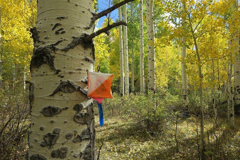 Navigation tool on an aspen tree